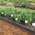 plants in a garden bed